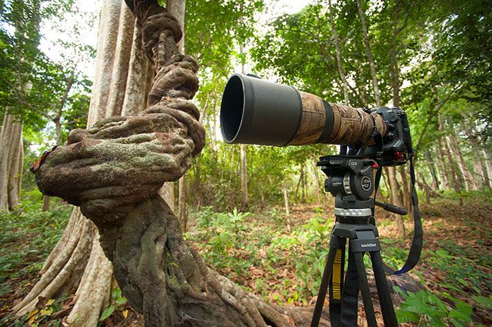 camera-with-vine
