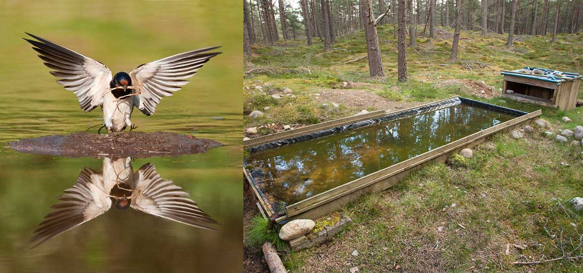 How to Build a Bird Reflection Pool