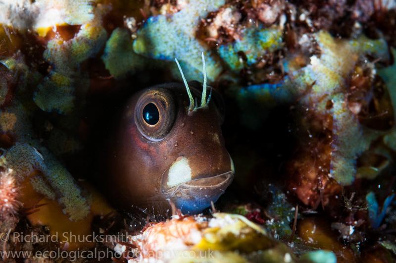 Richard Shucksmith Underwater