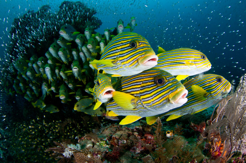 Underwater Yellow Fish