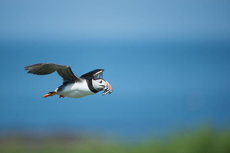 common mistakes wildlife photography
