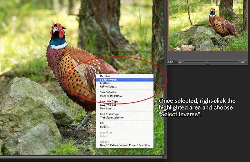 Select Inverse Photoshop