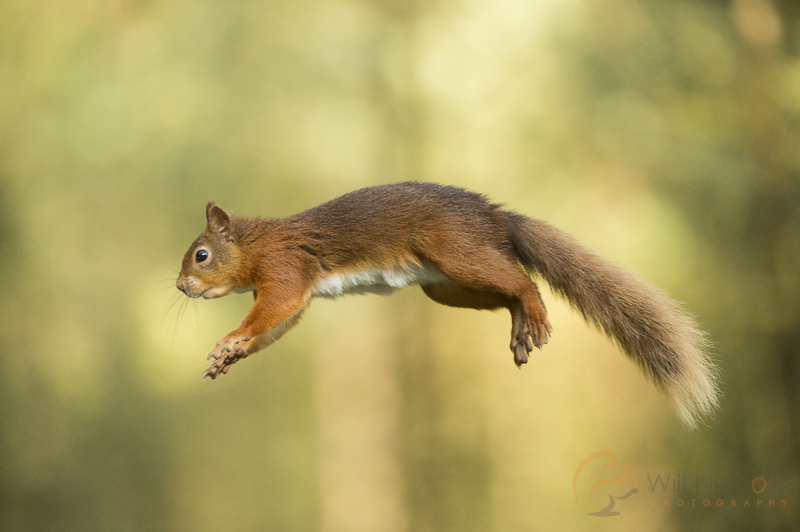 squirrel high speed