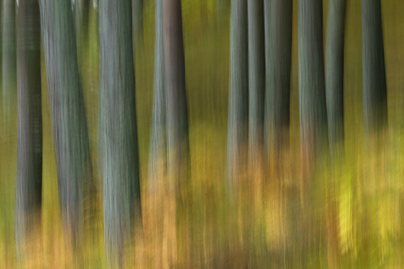 how to photograph autumn trees