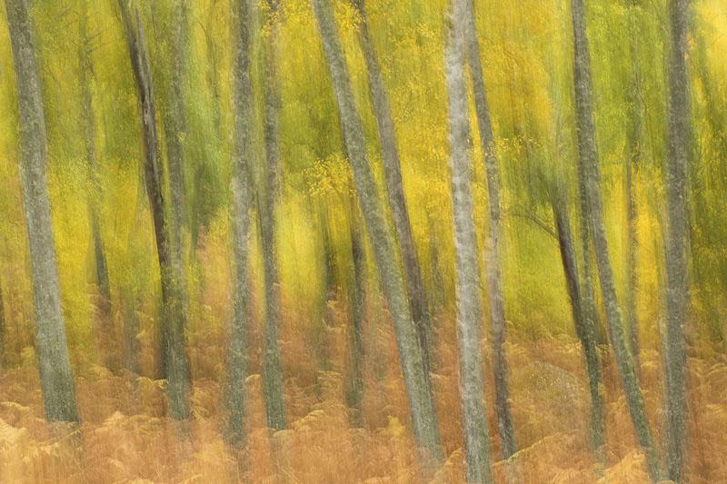 how to take photos of autumn trees