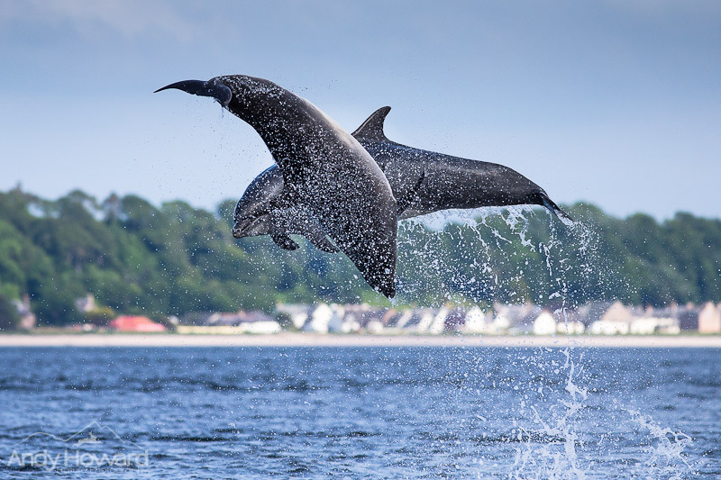 photographing dolphins andy howard