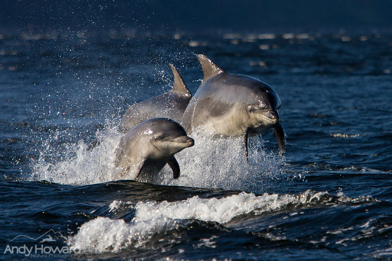 Where to photograph dolphins uk