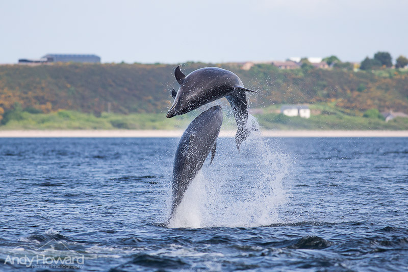 How to Photograph Jumping Dolphins