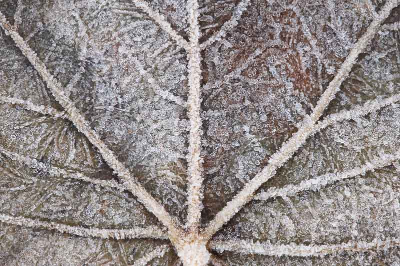 how to photograph frost and ice
