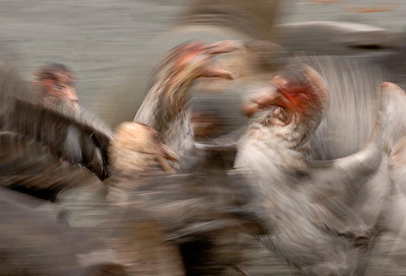 David Tipling Bird Photography