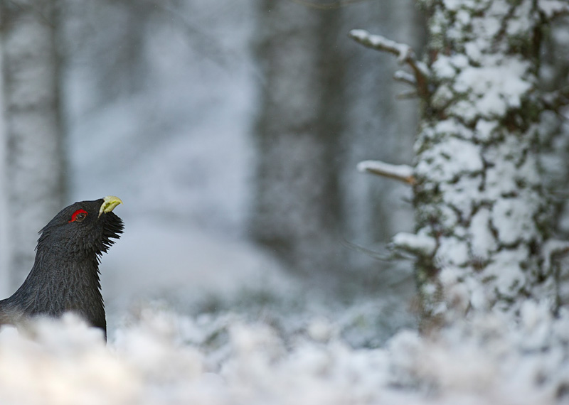 Bird Photography Composition