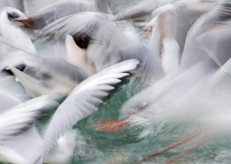 Bird Photography Settings