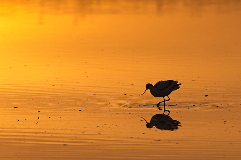 bird photography sunset
