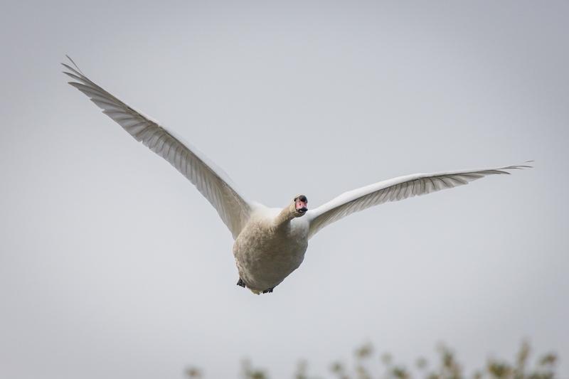 tamron 150-600mm bird photography review