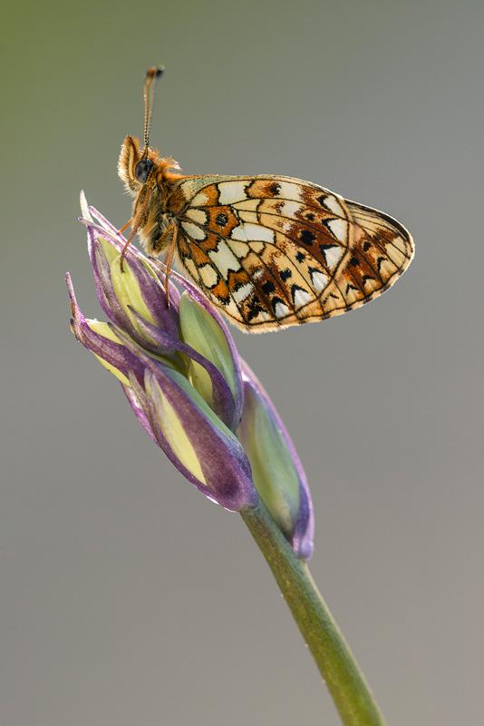 macro photography wildlife reflectors