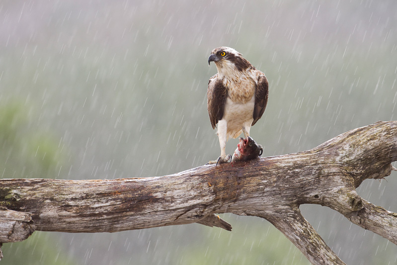 how to get rain streaks