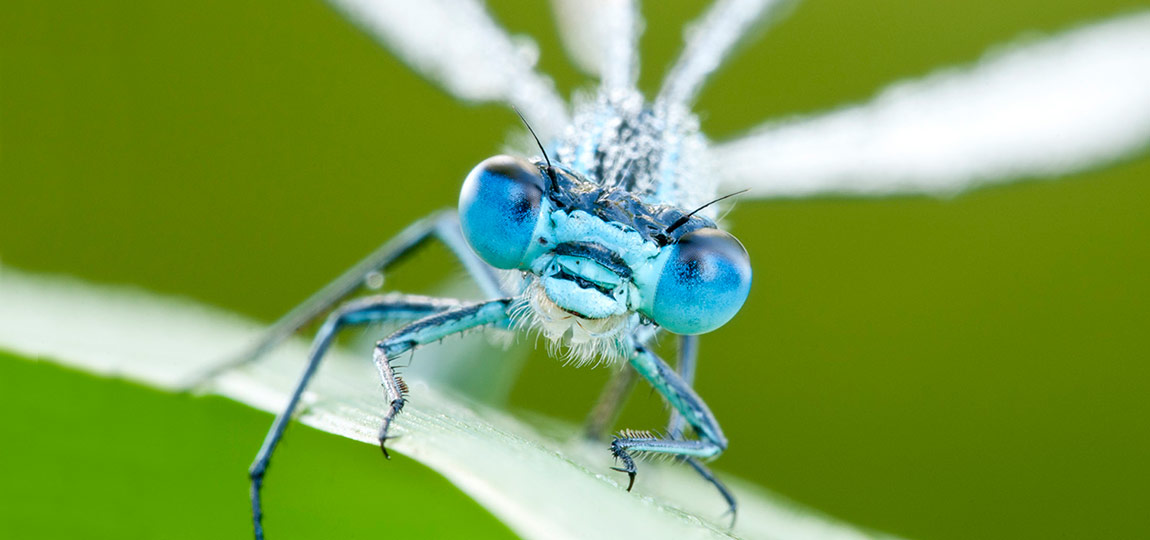 macro photography tutorials