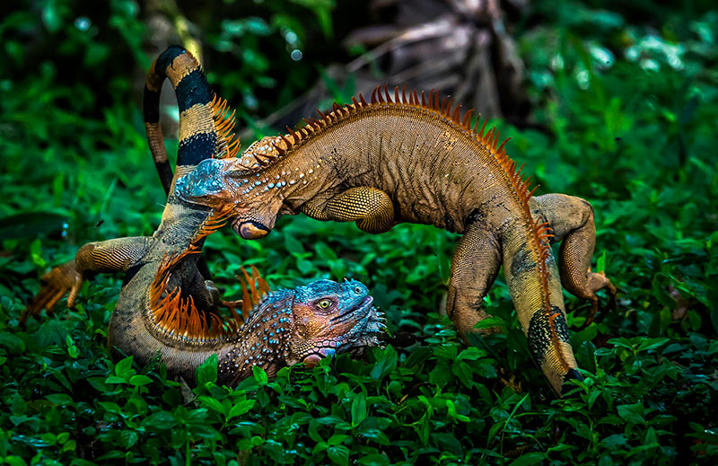 gergely biro wildlife photographer of the year competition