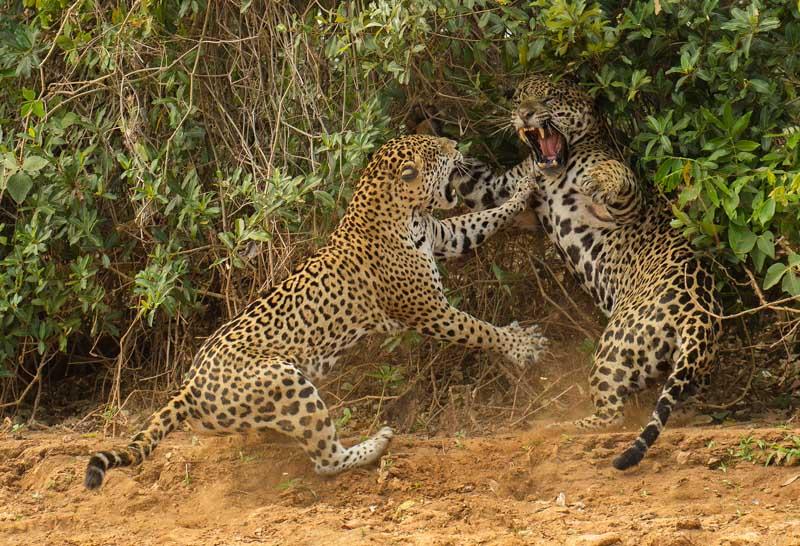 joe mcdonald wildlife photographer of the year