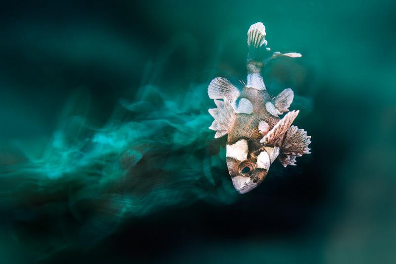 alex mustard underwater photography