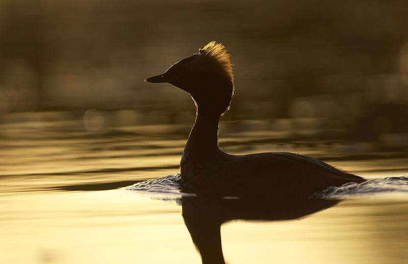wildlife silhouette golden light