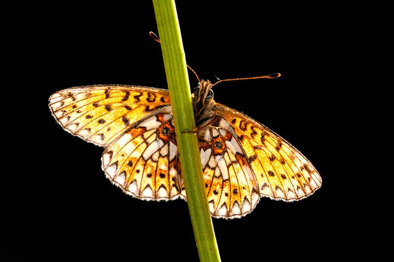 macro photography of butterflies