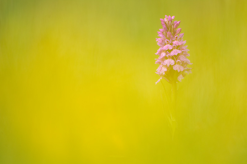 photographing flowers with a macro lens