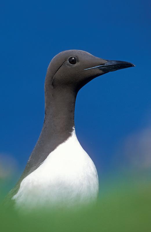 seabird photography
