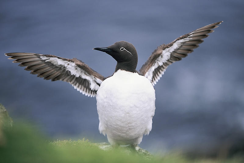 How to photograph seabirds.