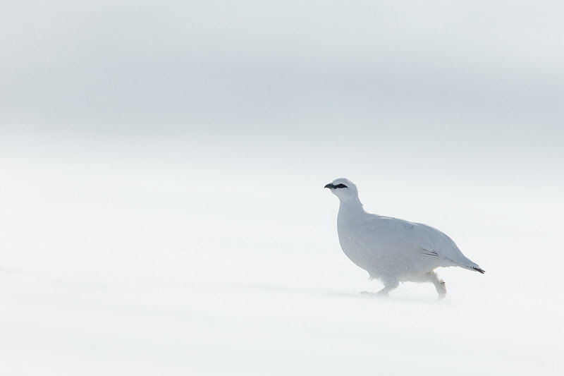 minimalist wildlife photography