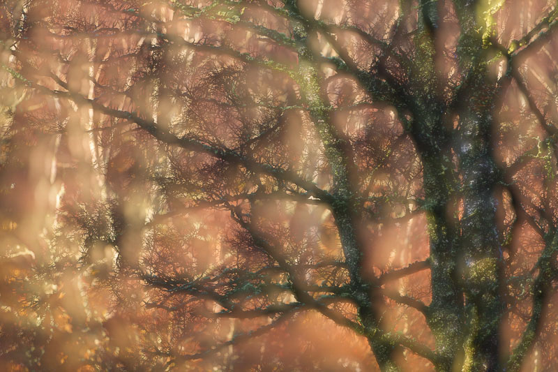 trees in a forest exposed