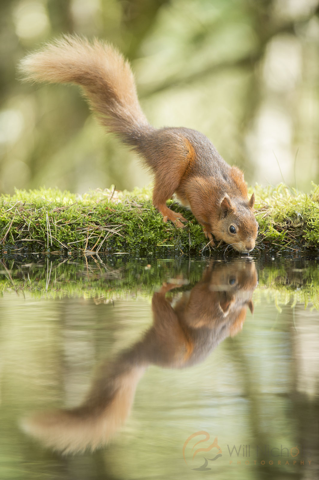 reflected animal pool