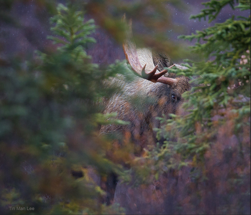 partially obscured wildlife photo tin man lee
