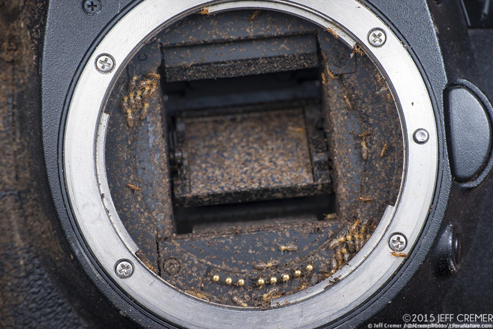 jeff cremer camera destroyed