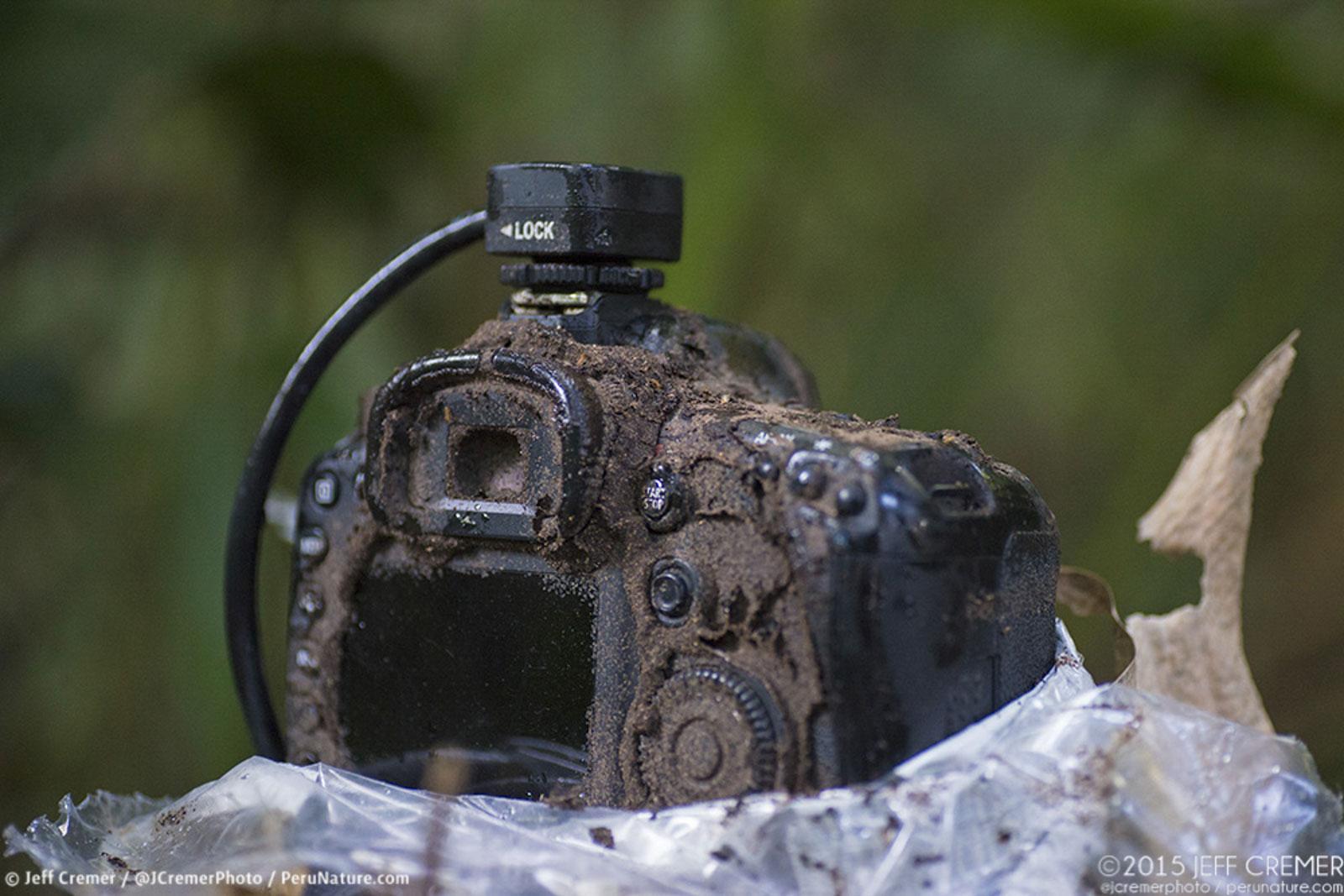 camera trap destroyed