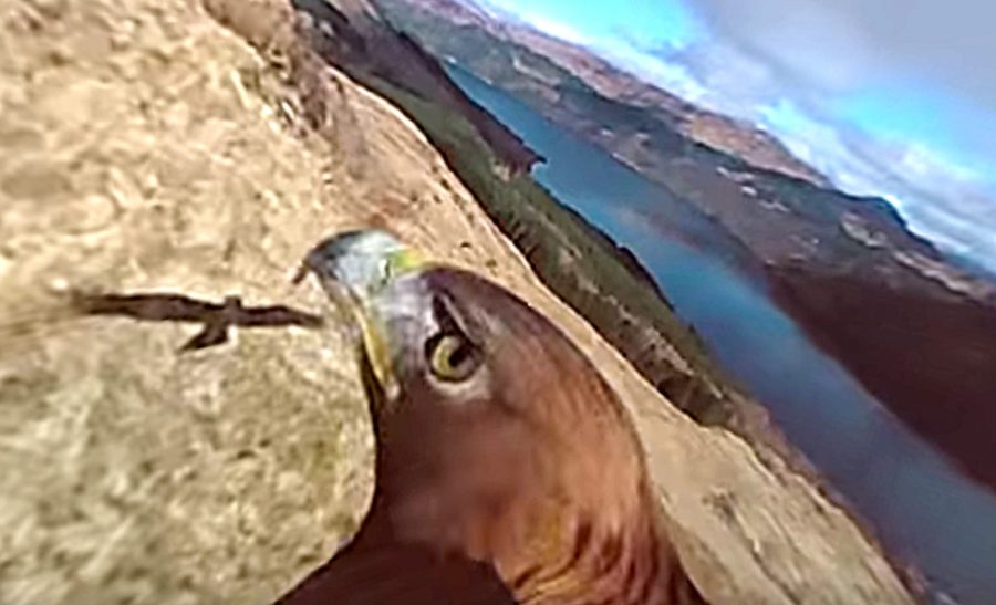 golden eagle 360 degree