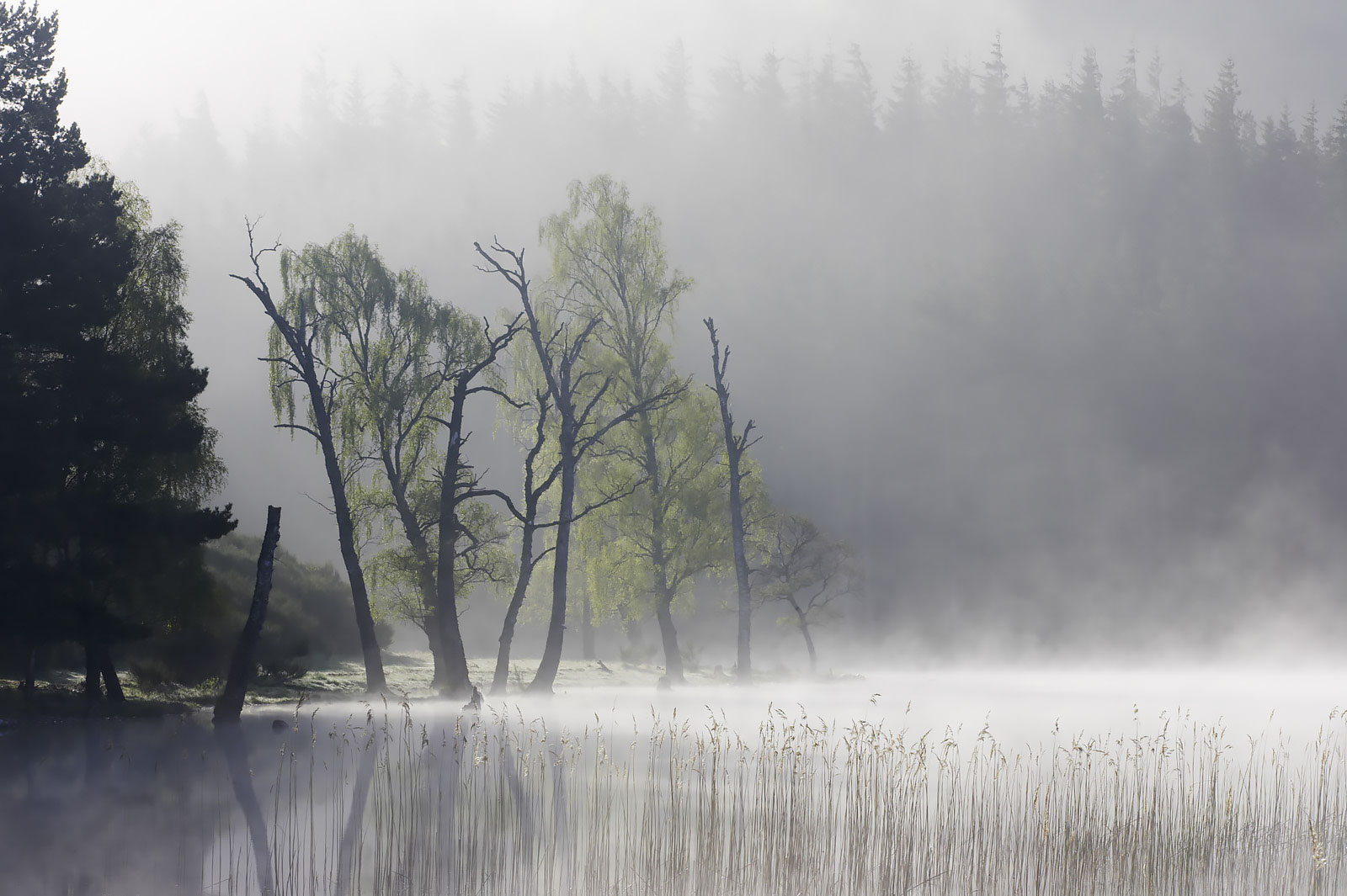 mist summer