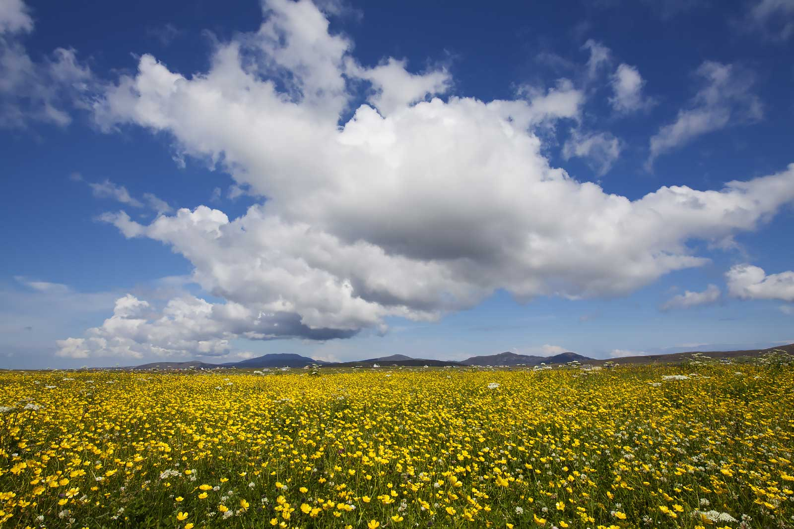 landscape summer season