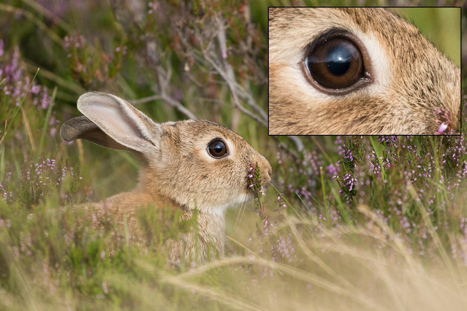 nikon 200-500mm sample wildlife image