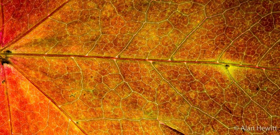 How To Photograph Backlit Autumn Leaves With Flash Nature Ttl