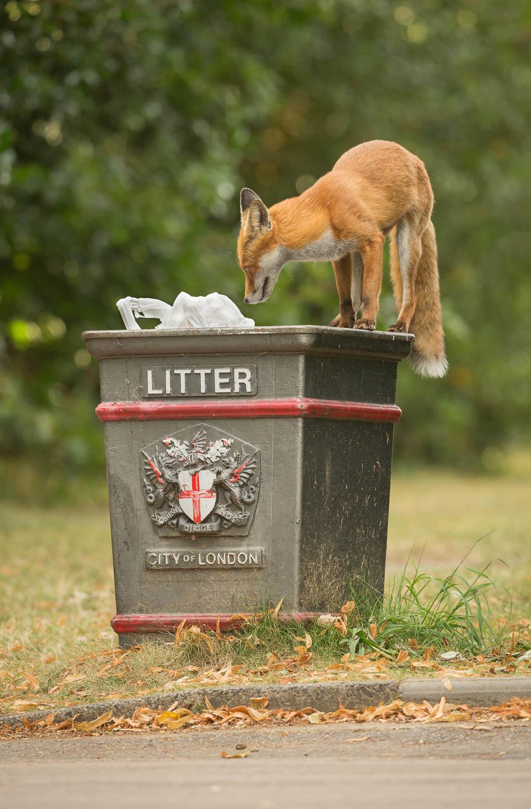 Urban wildlife in parks
