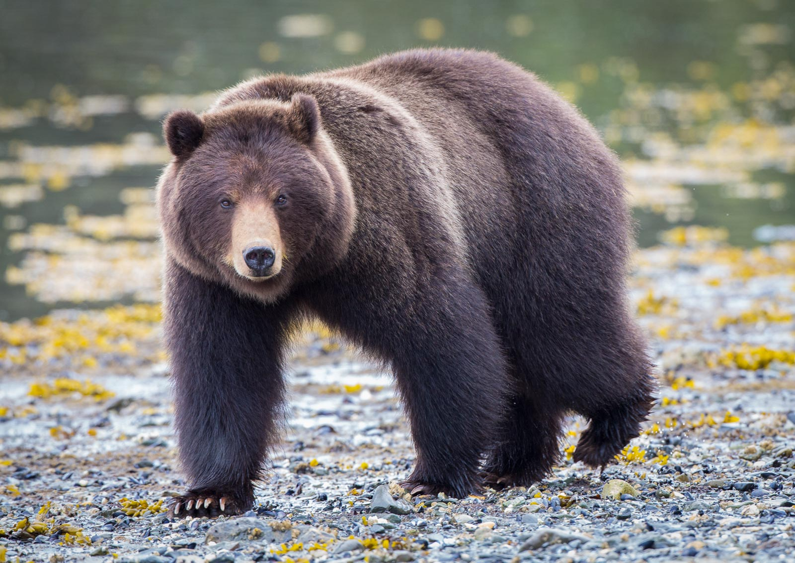 best places for photography in alaska