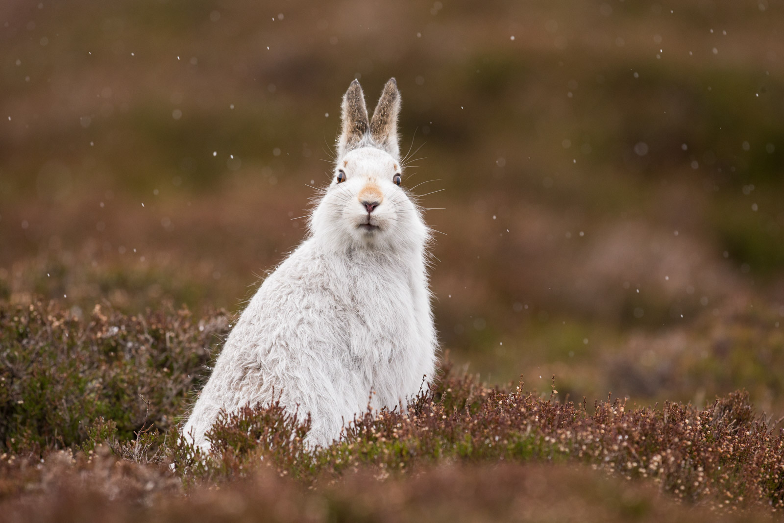 sigma 500mm f/4 lens wildlife photography sample images