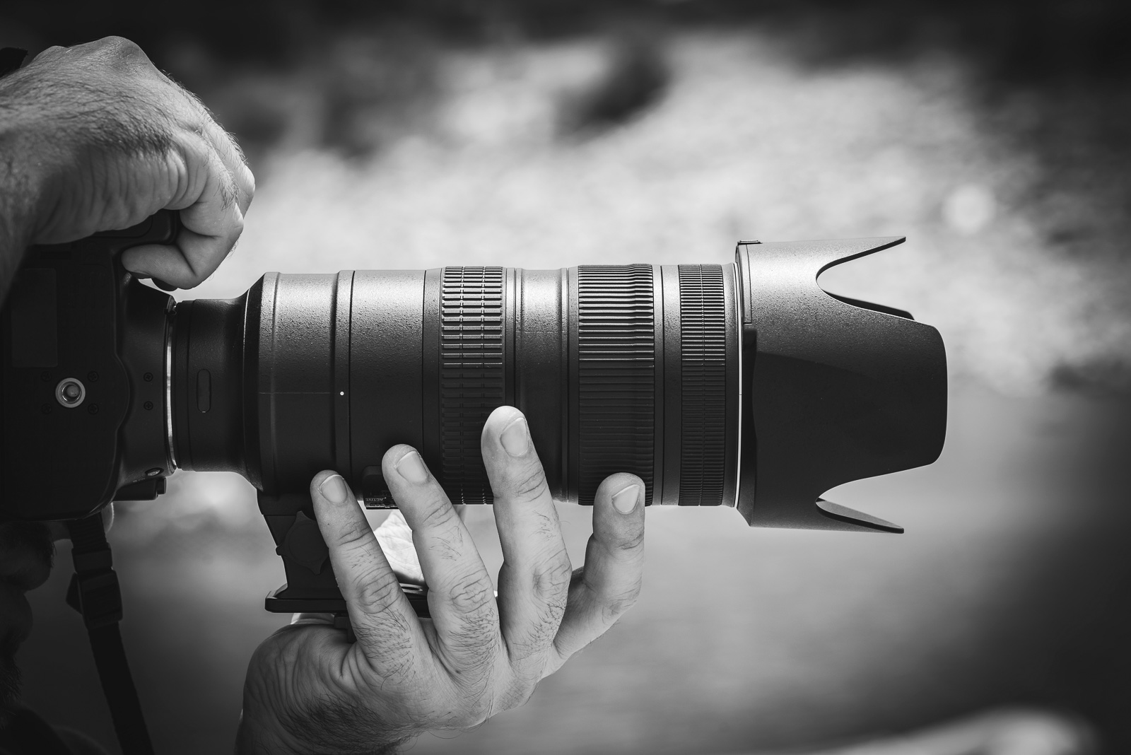 What's the Best Lens for Wildlife Photography? | Nature TTL