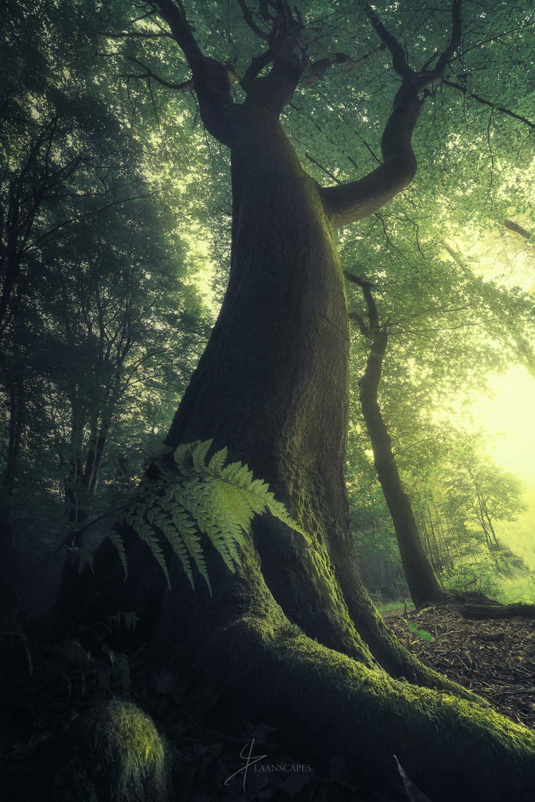How To Photograph Epic Wide Angle Shots Of Trees Nature Ttl