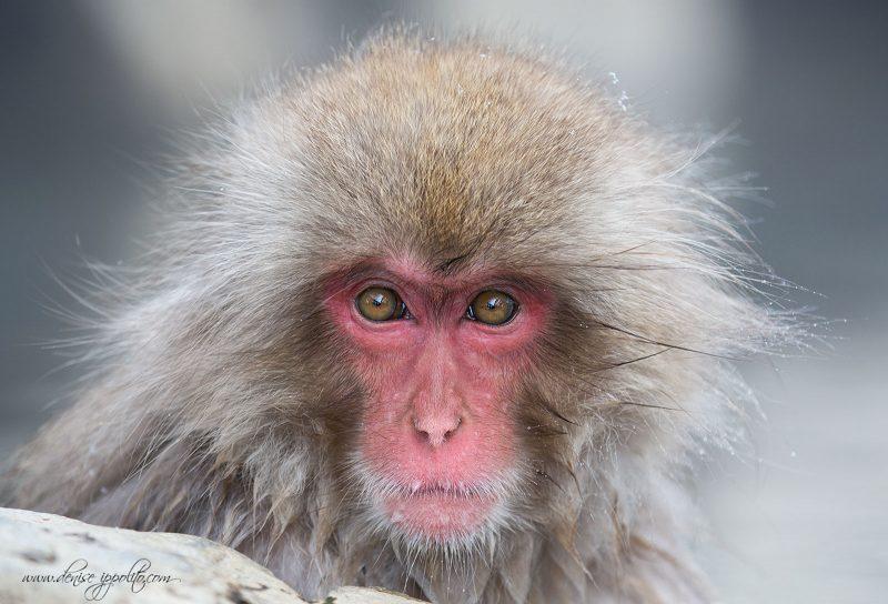 fine art guide wildlife photography