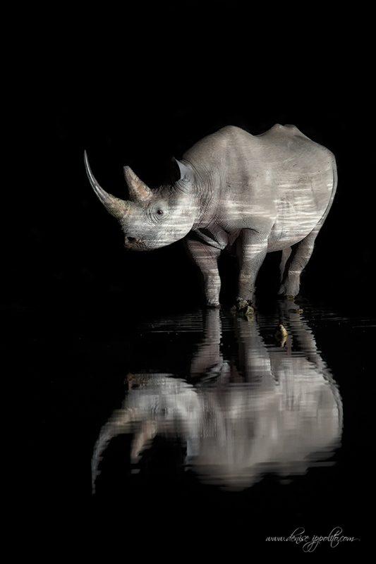 fine art wildlife photography guide