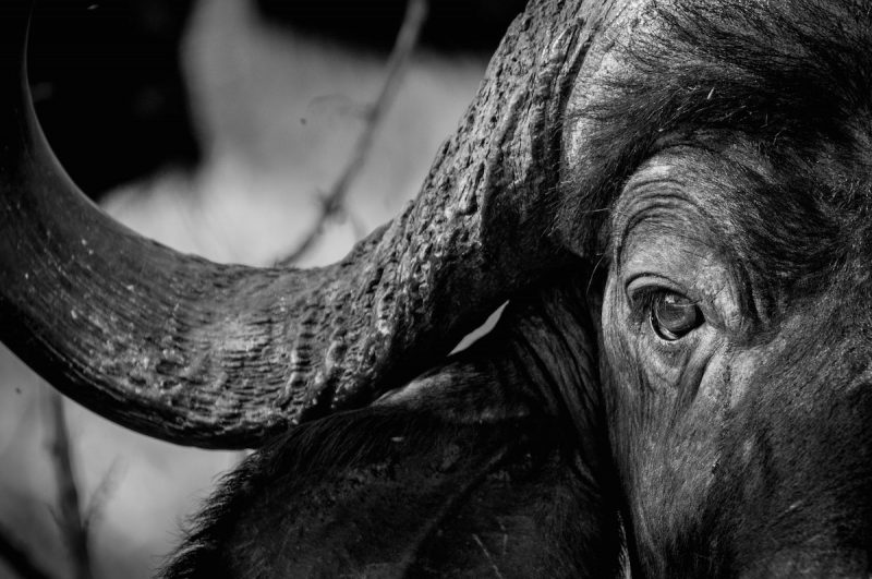 big five africa photography tips