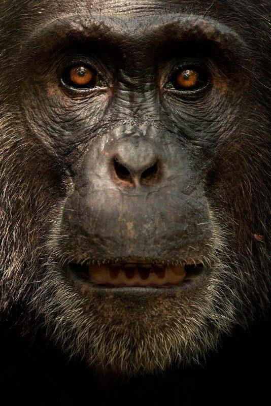 tesni ward wildlife photography