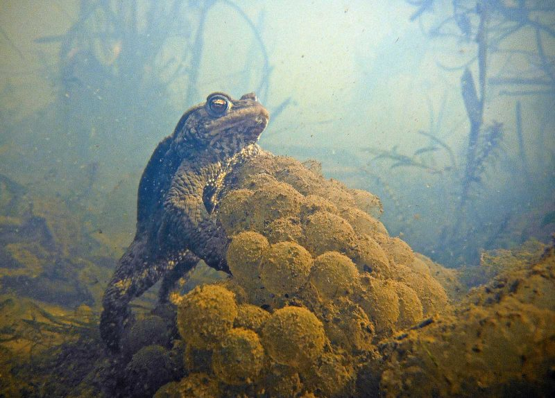 how to photograph frogs and toads